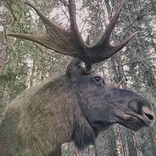 Varmlands-Moose-World_05
