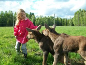 varmland-moose-world-booking-event-featured-image